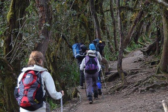 キリマンジャロ1日ハイキング
