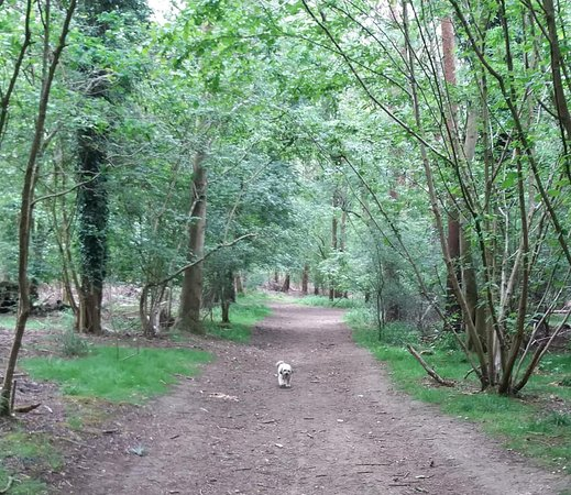 Reffley Wood