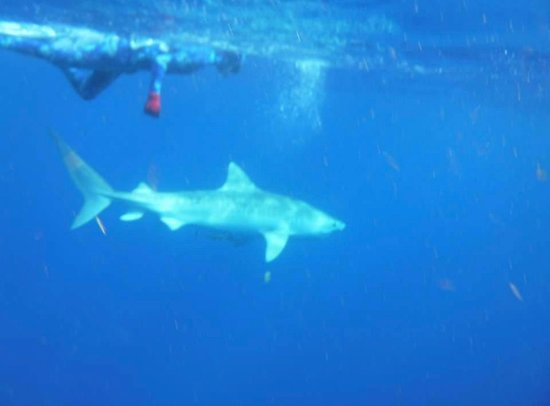Florida Shark Diving (Jupiter) - 2019 All You Need to Know