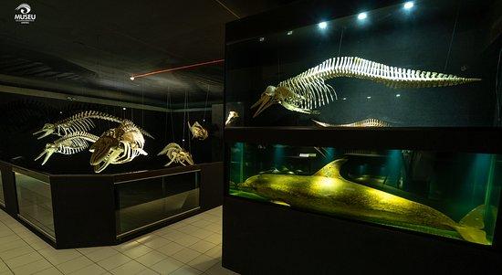 Oceanografico Univali Museum