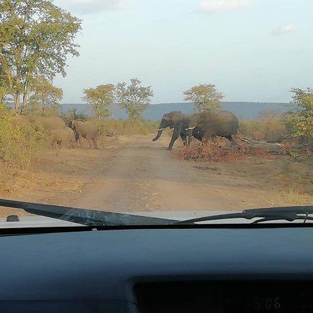 Chiredzi, Zimbabwe: Gona