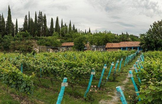 Shumi Winery