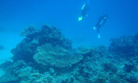 Silversonic Dive & Snorkel (Port Douglas) 2019 Alles wat u
