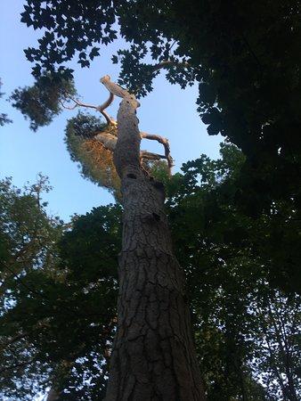 West Stow, UK: Fantastic trees
