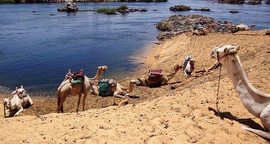 Rio Nilo em Assuão - Egito
