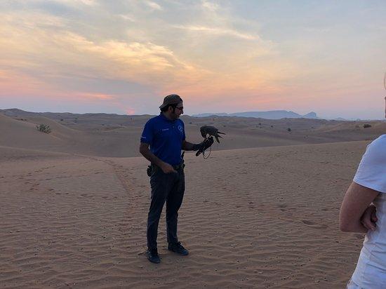 Sunrise Desert Safari with Picnic Breakfast from Dubai: Falconer