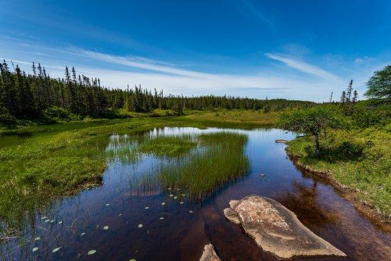 Glovertown, Canada : fresh water low lands