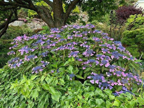 Flowers in Kippford