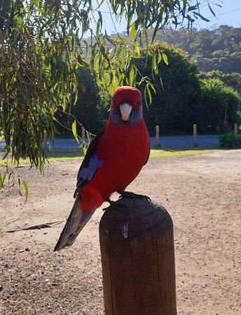 Kennett River, أستراليا: oiseau sauvage