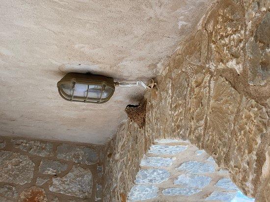 Porto Kayio, Yunanistan: il nido