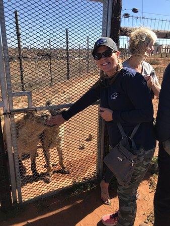 Kirkwood, Republika Południowej Afryki: Hyena visit!