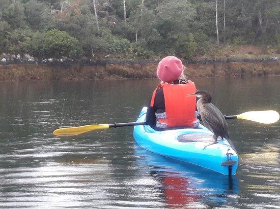 Гленгаррифф, Ирландия: Cormorant hopped onto a kayak stern to say hello!