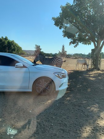 Cars and animals