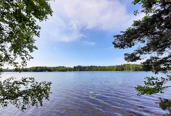 Liesjarvi, Finlandia: Lake view in a national park