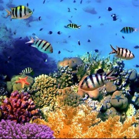 Honduras: Barriera corallina