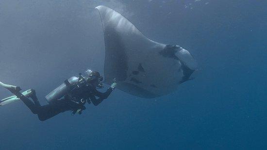 Tamarindo Diving