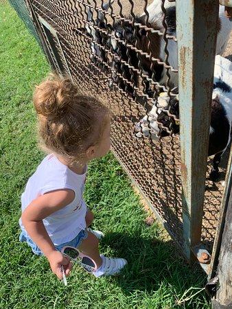 Agriturismo La Razza: Simpatici animaletti graditi ai più piccoli