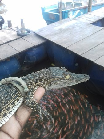 baby crocodile in my hands www.jemstours.com  Sri Lanka
