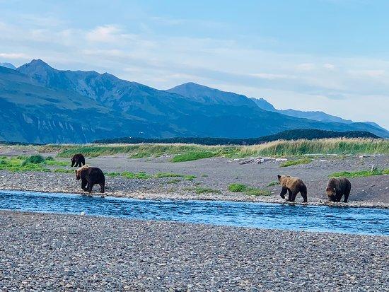 תמונה מClassic Bear Viewing Tour