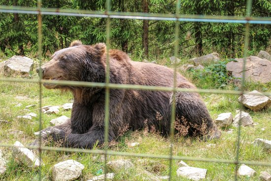 Synevyr, ยูเครน: Rehabilitační centrum hnědého medvěda