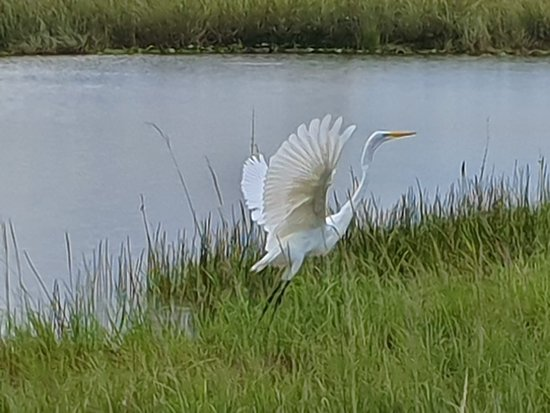 Everglades Airboat Private Nature and History Tour: bird