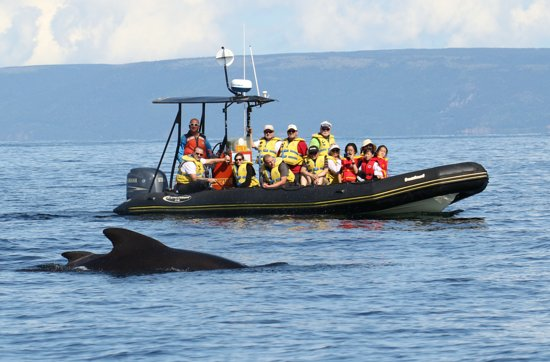 Cheticamp, Canada: close up encounter with Pilot Whales