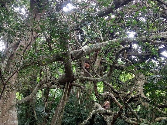 從會走路的樹體悟大自然的偉大與智慧