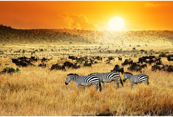 Serengeti Nemzeti Park, Tanzánia: Enjoy sunset at the beautiful fields of the Mara and Serengeti