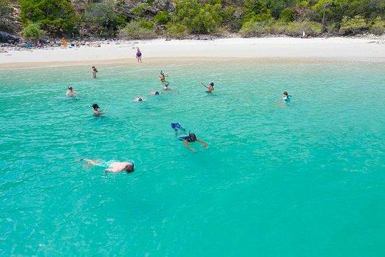 Stray Australia: tour de estilo libre...