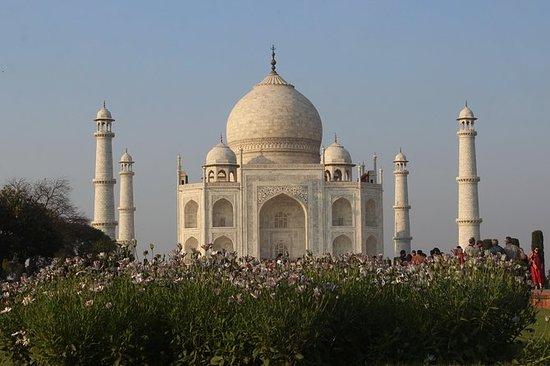 Fra Delhi: Taj Mahal og Agra Fort av...