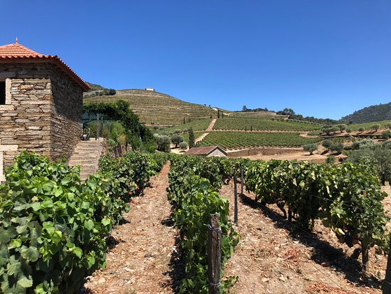 Фотография Complete Douro Valley Wine Tour with Lunch, Wine Tastings and River Cruise