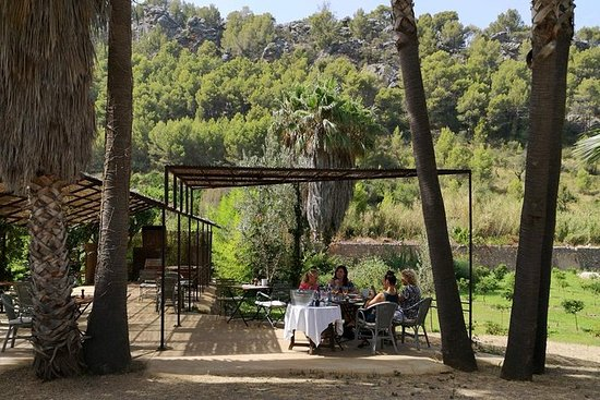 Tour de culture de l'huile d'olive et...