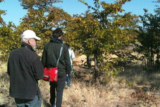 Neshornvandring