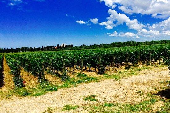 Tour de cata de vinos del castillo en...