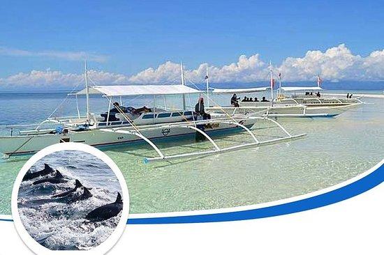 Observación de delfines y salto de...