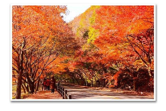 Rødt blad må velges> Hidden Mountain...