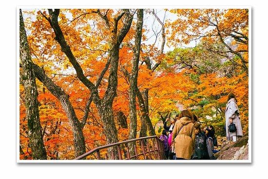 Seoraksan + Luoshan Temple + Sokcho...