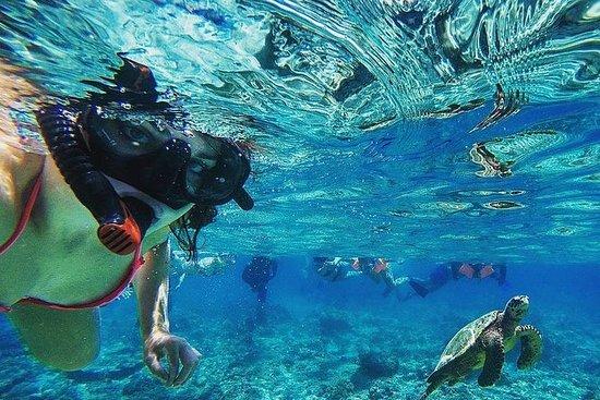 2つの島(ペニダ&レンボンガン)マングローブ林ツアーでのシュノーケリング旅行