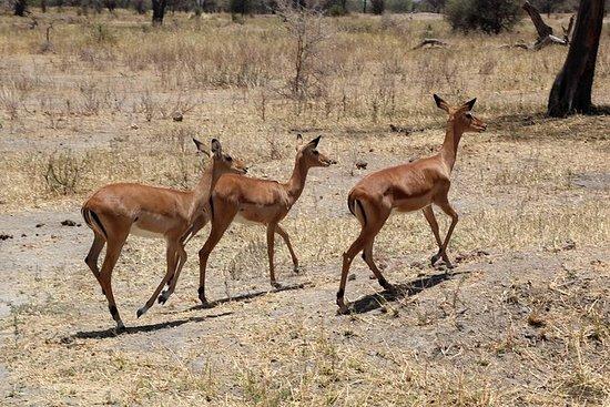5 días safaris en Tanzania