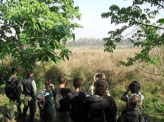 Dagsutflykt i Chitwan National Park ...