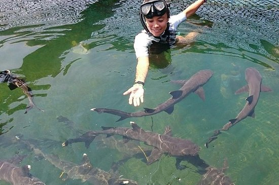 Svøm med Sharks Bali og gratis...