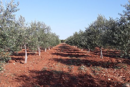 Experience the olive oil world
