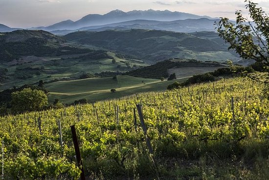Vineyard Tours Follwed by Wine ...