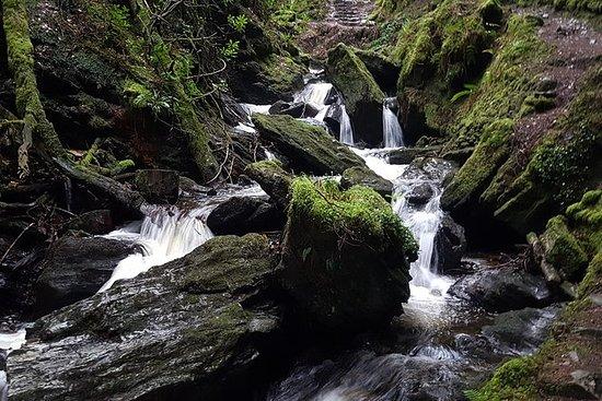 Magisk, fortryllende Forest Walk, Loch...