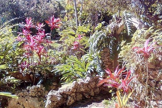 Tour Andromeda Botanic Gardens