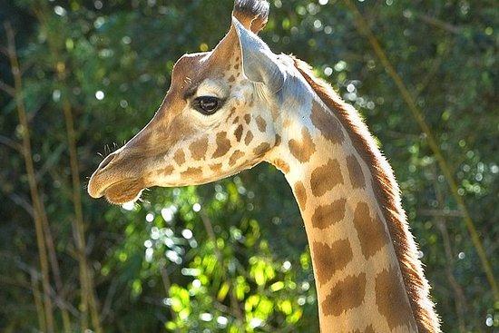 Zoo des Sables entrébiljett
