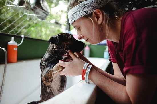 Animal Volunteer Experience at Rescue...
