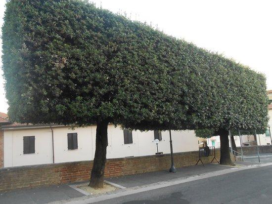 קיאנצ'נו טרמה, איטליה: potature