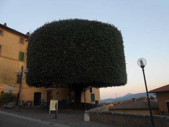 קיאנצ'נו טרמה, איטליה: alberi