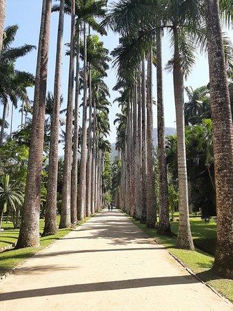 Visite du Jardin Botanique de Rio